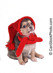 Funny Puppy in Gnome Dressing - Cute Small Puppy Dressed in...