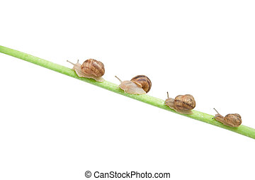 family of snail climbing on green stick