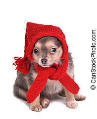Puppy Dressed for Christmas - Cute Puppy Dressed in Red for...