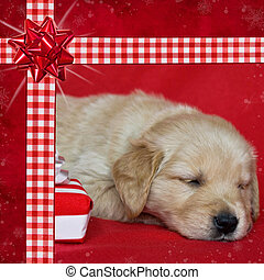 Christmas Cute - Golden retriever puppy in gingham ribbon...