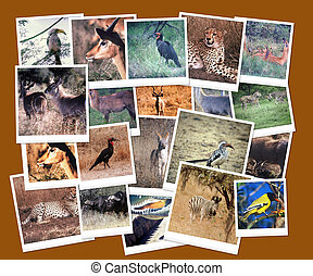 South African Wild Life Collage - South African Wild Life...