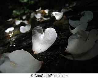 Petals CorFlors GR-7 a Juviles T - Petals with Heart shape...
