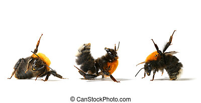 dance bumble bee - dance aerobic bumble bee isolated on...
