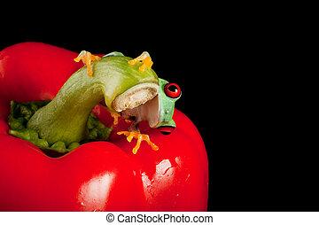 Red eyed frog peeking