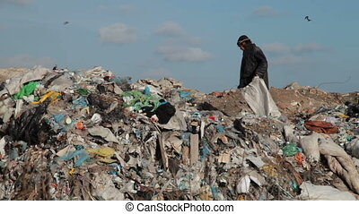 Working in a landfill - woman working in the landfill