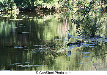 Louisana New Orleans Swamp Scene - A white Egret and a...