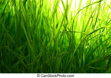 grass macro close up natura background
