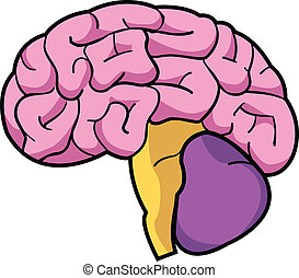 Brain - A simple, colorful illustration of the human brain.
