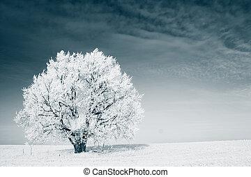 Tree - Frozen tree on winter field and blue sky
