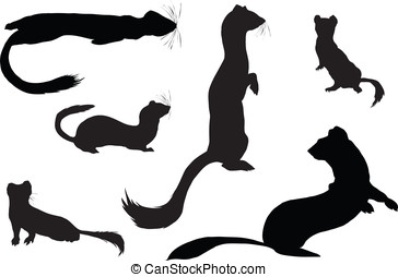 ermines contuor - Set of planimetric silhouettes of ermines