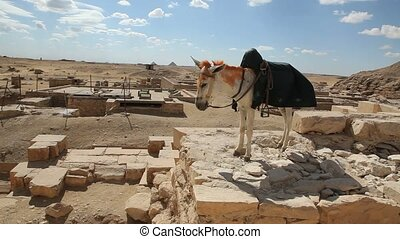 Donkey on top of Ancient Stones in Egypt