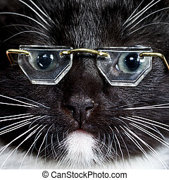 Cat wearing glasses - Close-up portrait of a black kitten...