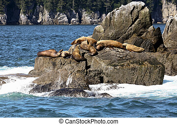 Sea Lions in Valdez, Alaska USA - Sea lions sunning on a...