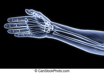 human hand under the X-rays.
