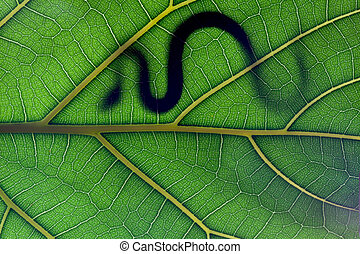 Snake stay on leaf in backlight