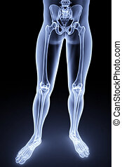 feet - male feet under the X-rays. 3d image.