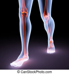 feet walking person under X-rays. bones are highlighted in...