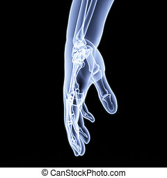 hand - human hand under X-rays 3d image