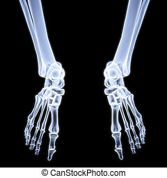 legs - human legs under X-rays. 3d image.