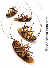 Dead cockroaches lying on white background