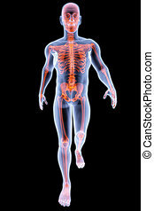 human xray - walking man under X-rays. 3d render.