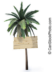 signpost - wooden signs hanging on the trunk of a palm...