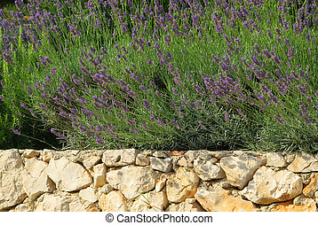 lavender on wall 03