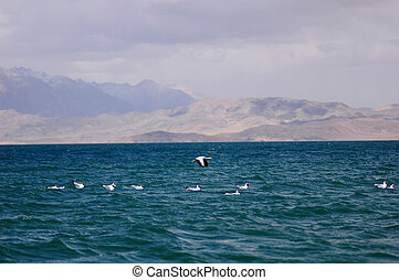 Seabirds in a lake - Seabirds swimming and flying at a blue...