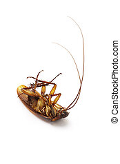 Dead cockroach with long feelers on white background