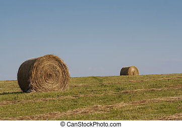 haymaking time - Shot of the landscape - hay-meadow