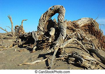 Dead trees in the desert