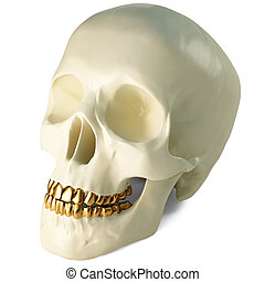 skull - in the jaws of the skull gold teeth. 3d image. with...