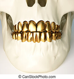 teeth - in the jaws of the skull gold teeth. 3d image.