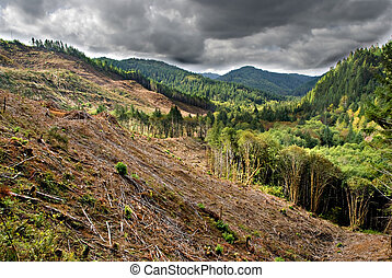 Stormy Clear Cut - Clear cut logging operations in stormy...