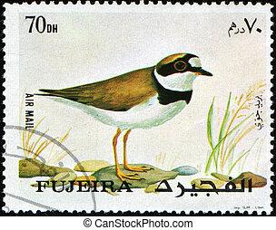 Little Ringed Plover - Charadrius dubius - FUJEIRA - CIRCA...