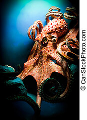 Scary Giant Octopus, taken with Nikon D700