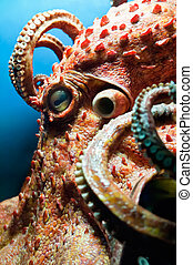 Head of an Octopus with some Tentacles