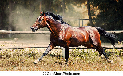 Nice brown horse running