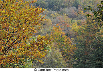 autumn leaves #7 - colorful autumnal leaves in woods on...