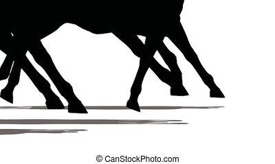 Feet of running horses, close-up - Feet of running horses,...