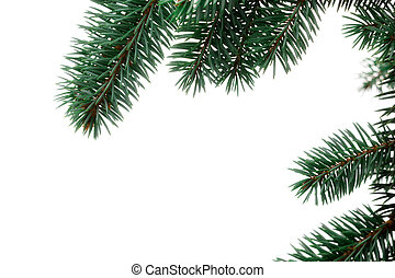 Pine Sprig for Christmas - A sprig of pine, isolated on a...