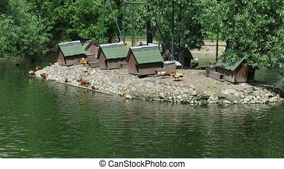 Island with birds and small houses for birds in a pond in zoo.
