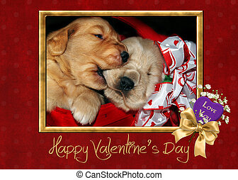 Nibbling Sibling - Pair of valentine golden retriever pups...