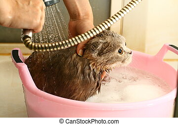 wash cat under water wet