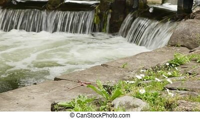 Clear stream calmly running by stones and beautiful daisies
