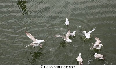 Top down view on some little seagulls playing in water and...