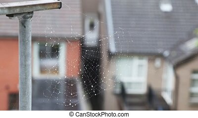 spiderweb waving by wind, Irish houses on background