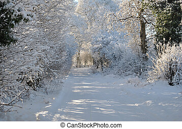 snow covered trees on a laneway