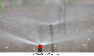 Sprinkling in the garden, foreground,closeup, Canon XH A1,...
