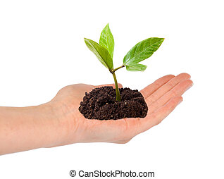 Open hand with green plant in it